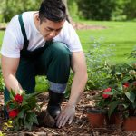 28646787 - planting flowers in a beautiful green garden