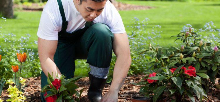 Kertész, kertfenntartó munka bentlakással, Dél-kelet Anglia